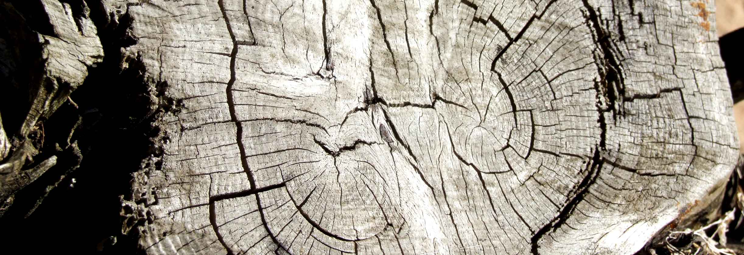Woodworking Company wood4home