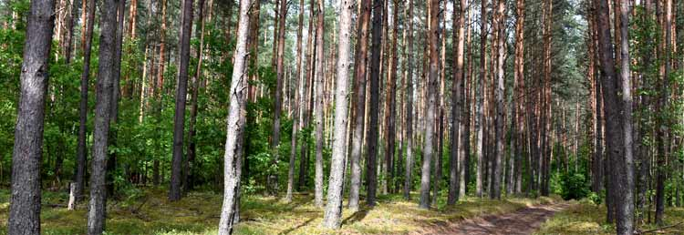Woodworking Company wood4home  forest woodland woods
